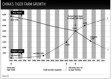 Tiger farming chart